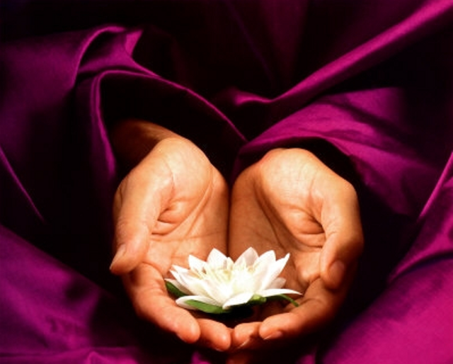 Two hands holding white lotus flower against lush, magenta-colored fabric at Vinayam